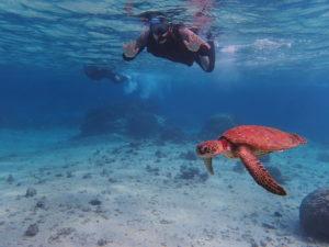 宮古島旅行でウミガメと並んでシュノーケリング