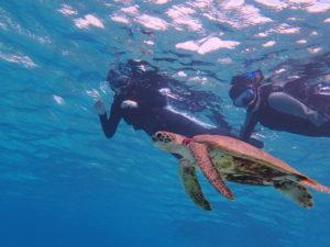 宮古島の海でウミガメと並んで泳ぐ