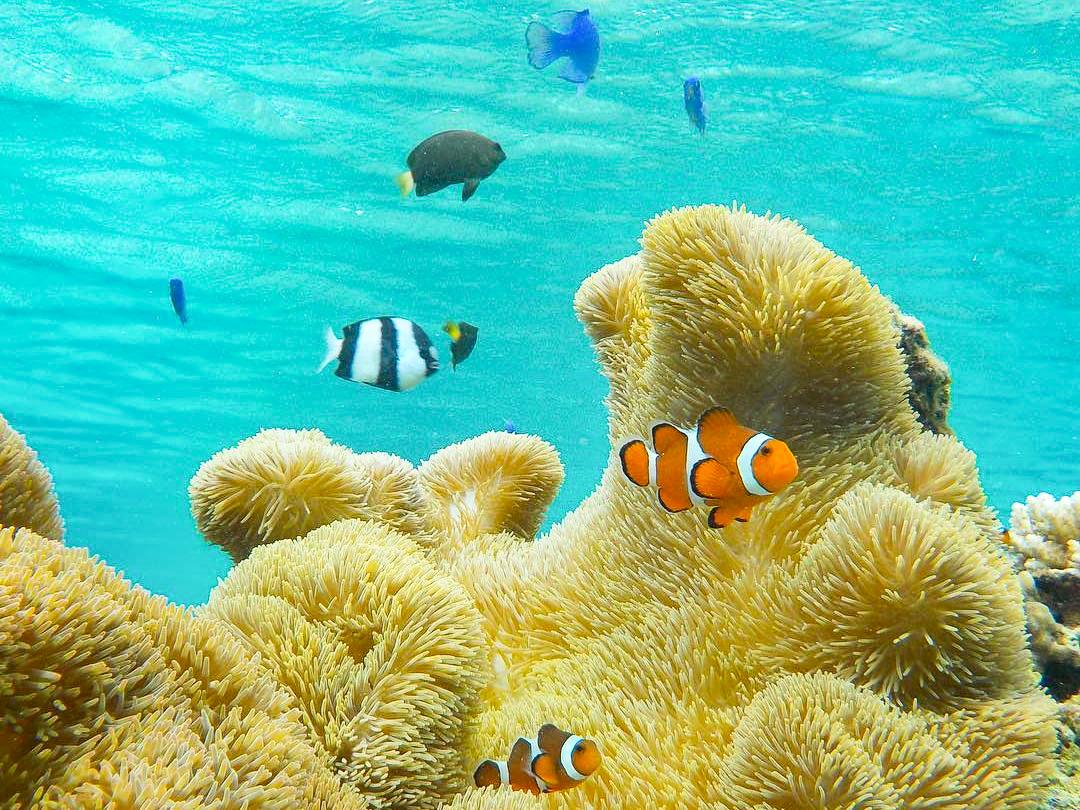 カクレクマノミなどのカラフル熱帯魚