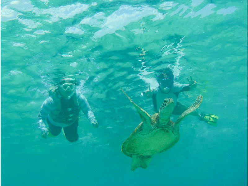 ウミガメと一緒に泳ぐシュノーケリングツアー