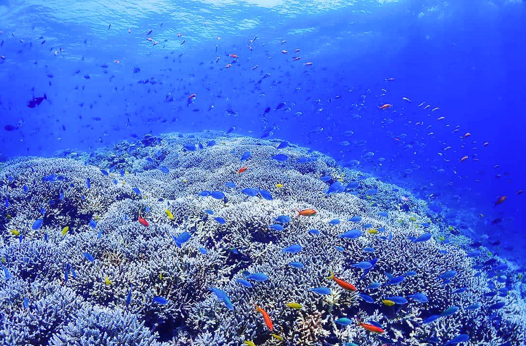 世界有数のカラフルサンゴエリアである八重干瀬で体験ダイビング