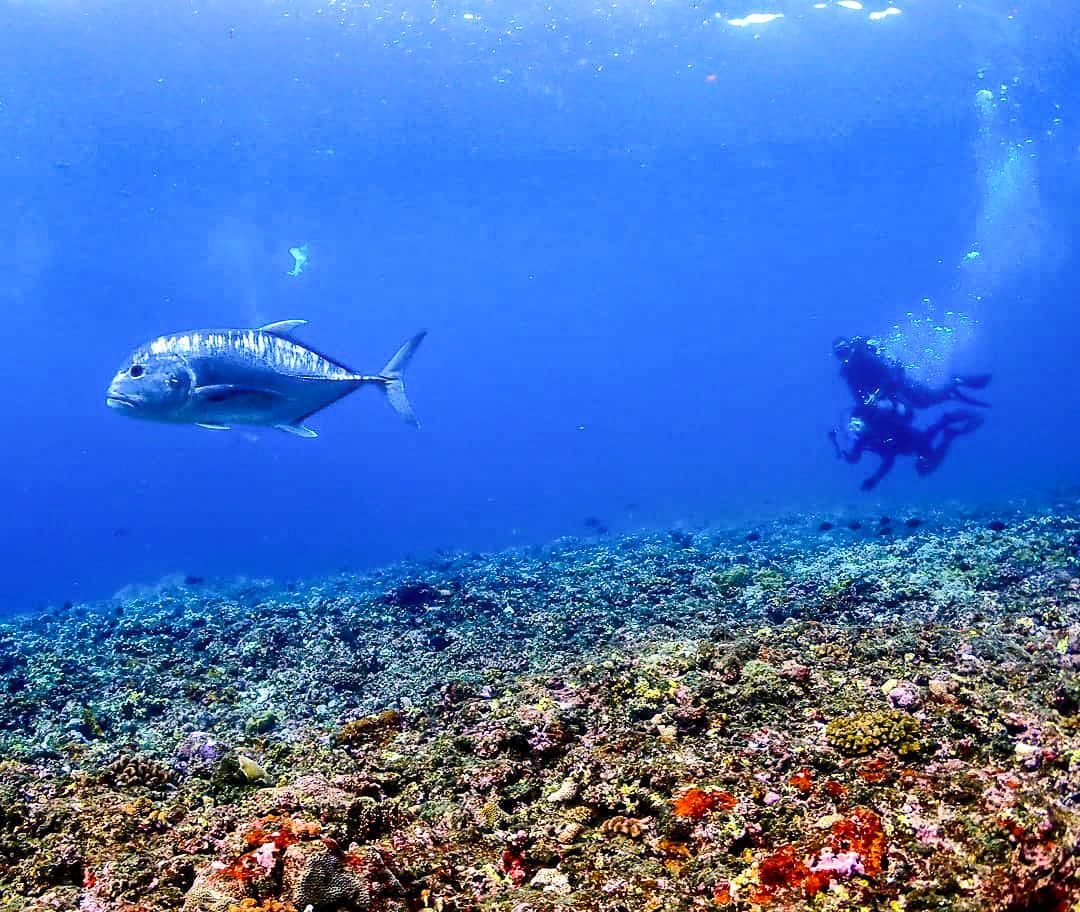 大物にも出会える体験ダイビング