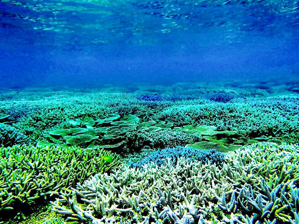 日本有数のサンゴをグラスボートで観察
