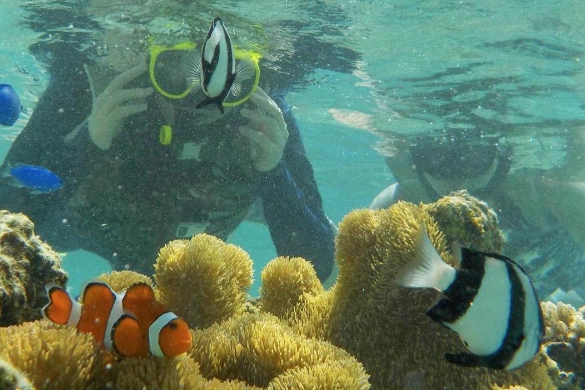 熱帯魚と泳ぐ