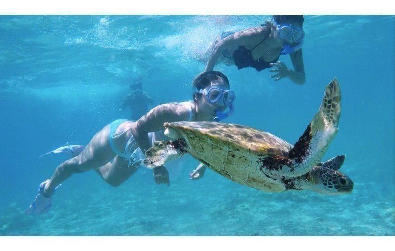 伊良部島でウミガメと泳ぐ