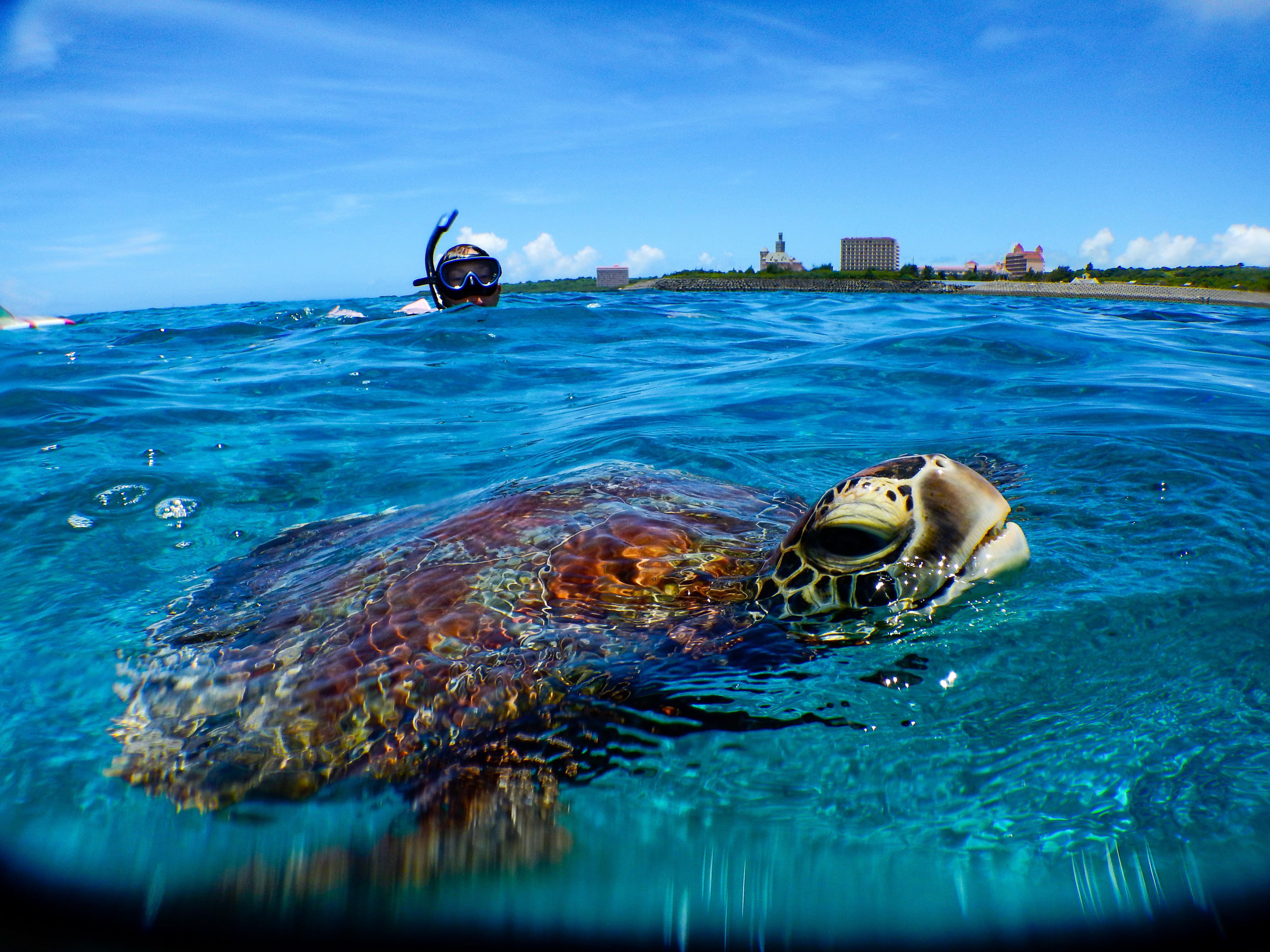 ウミガメと一緒に泳ぐことが出来るツアー