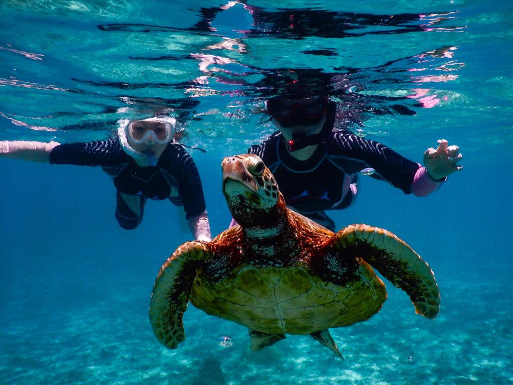 宮古島の観光スポットのシギラビーチでウミガメとシュノーケリングを楽しむ