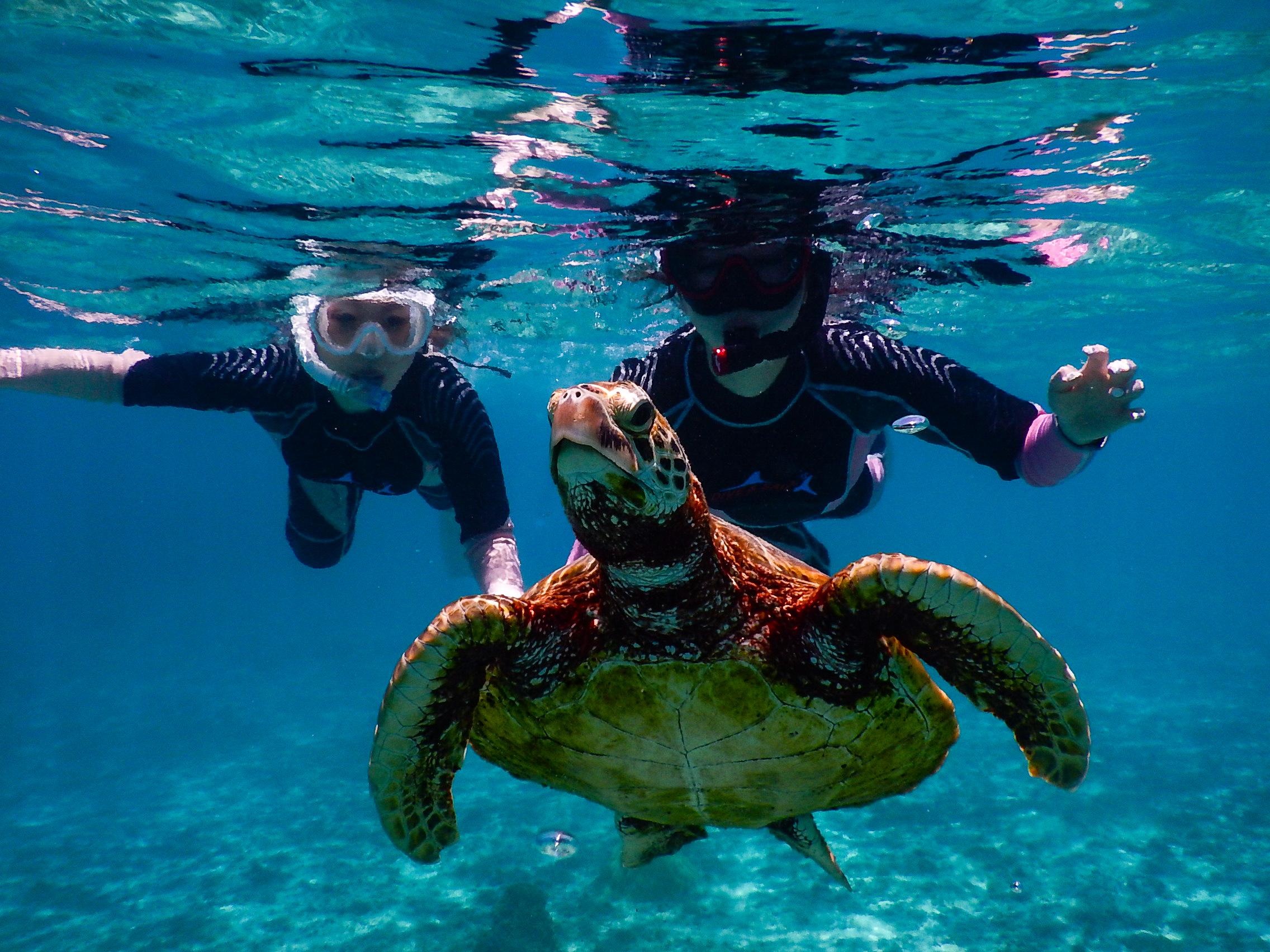 シギラビーチでウミガメとシュノーケリングを楽しむ