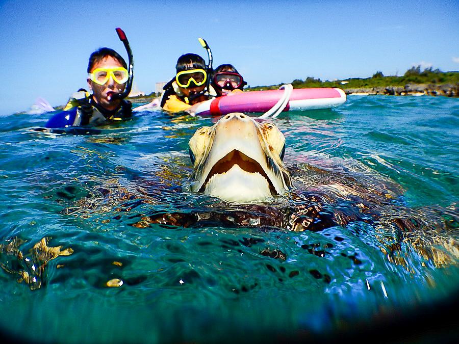 99%ウミガメができるポイントでシュノーケリング