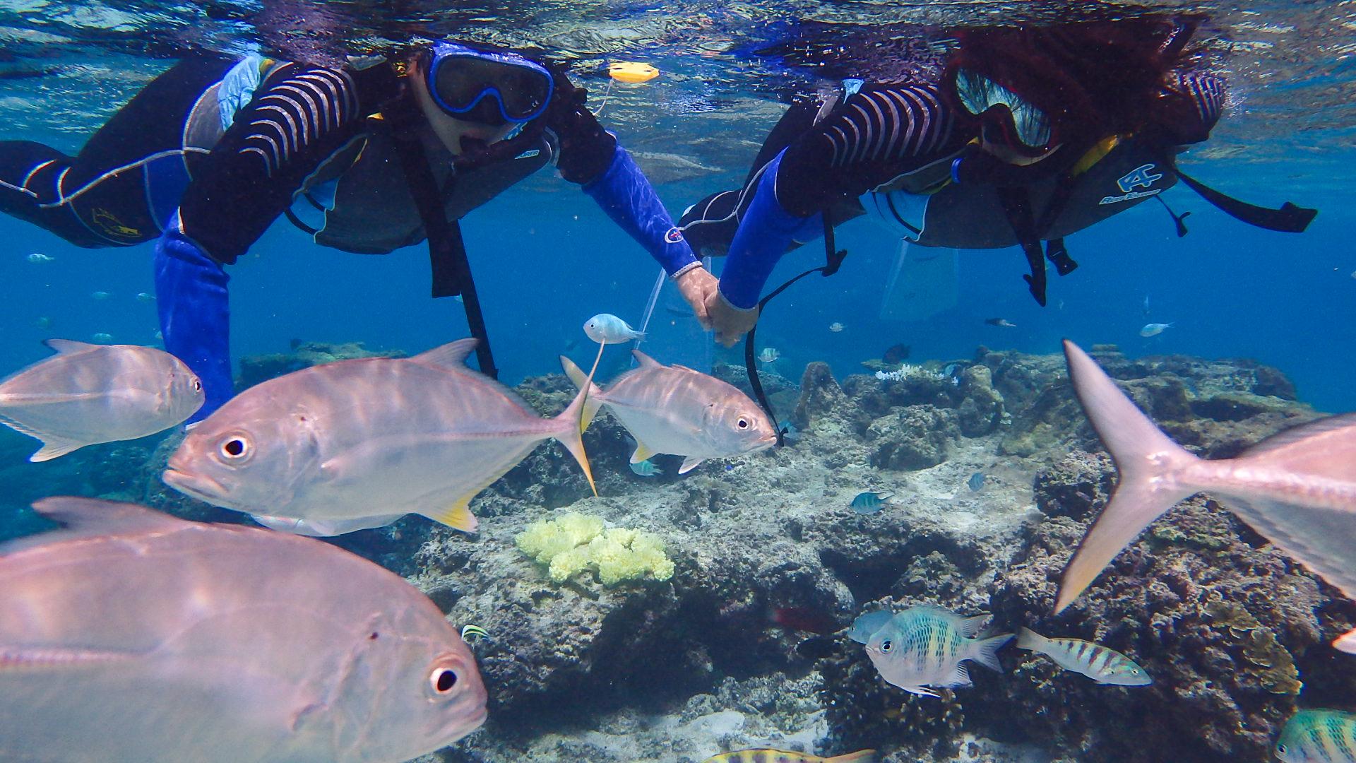 大きな熱帯魚をシュノーケリングで鑑賞