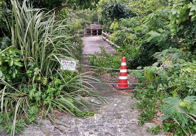 宮古島の観光スポットの川満マングローブ