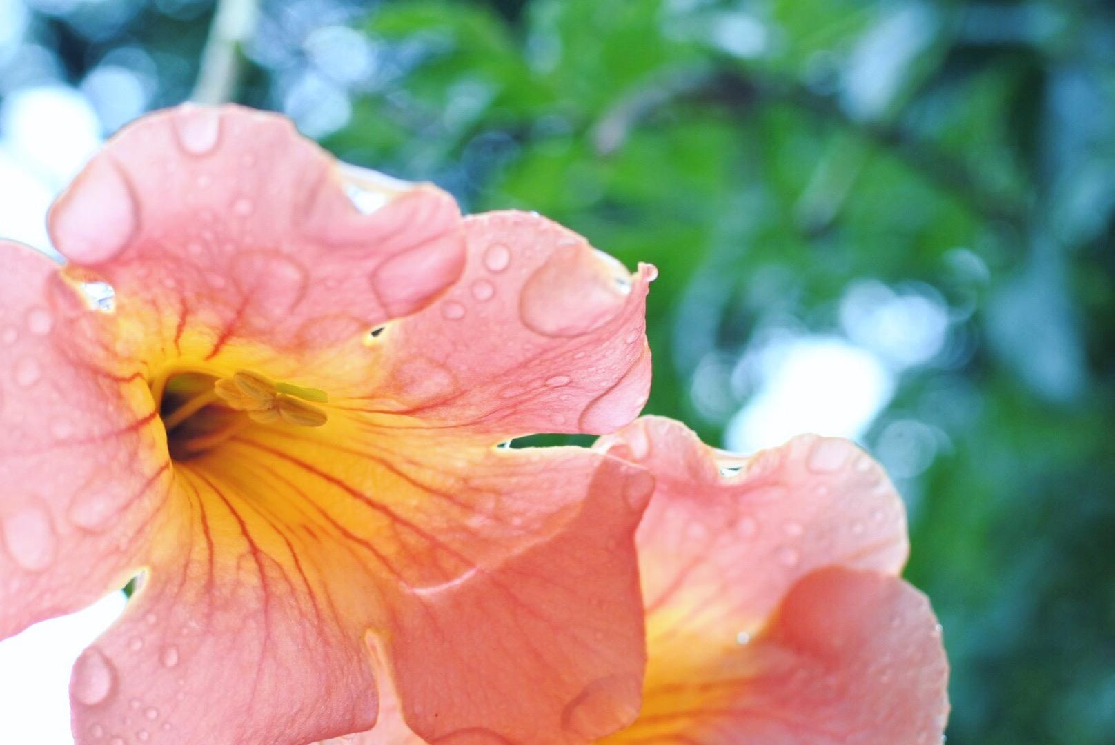 雨の宮古島イメージ