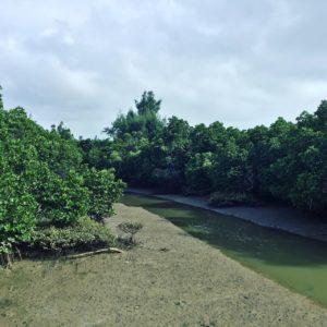 宮古島の観光スポットの島尻マングローブ