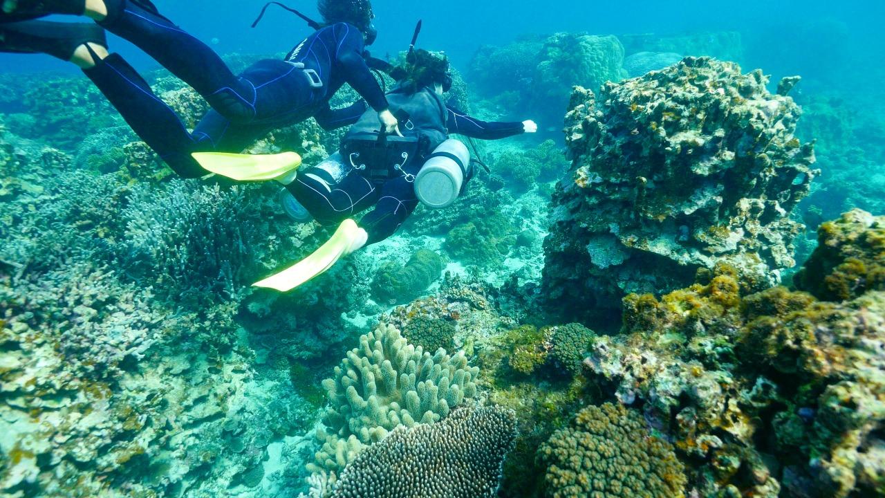 中の島体験ダイビング