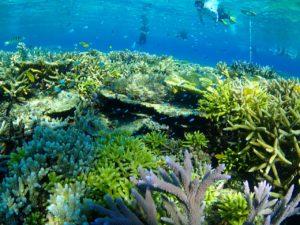 宮古島の観光スポットの八重干瀬の海中風景