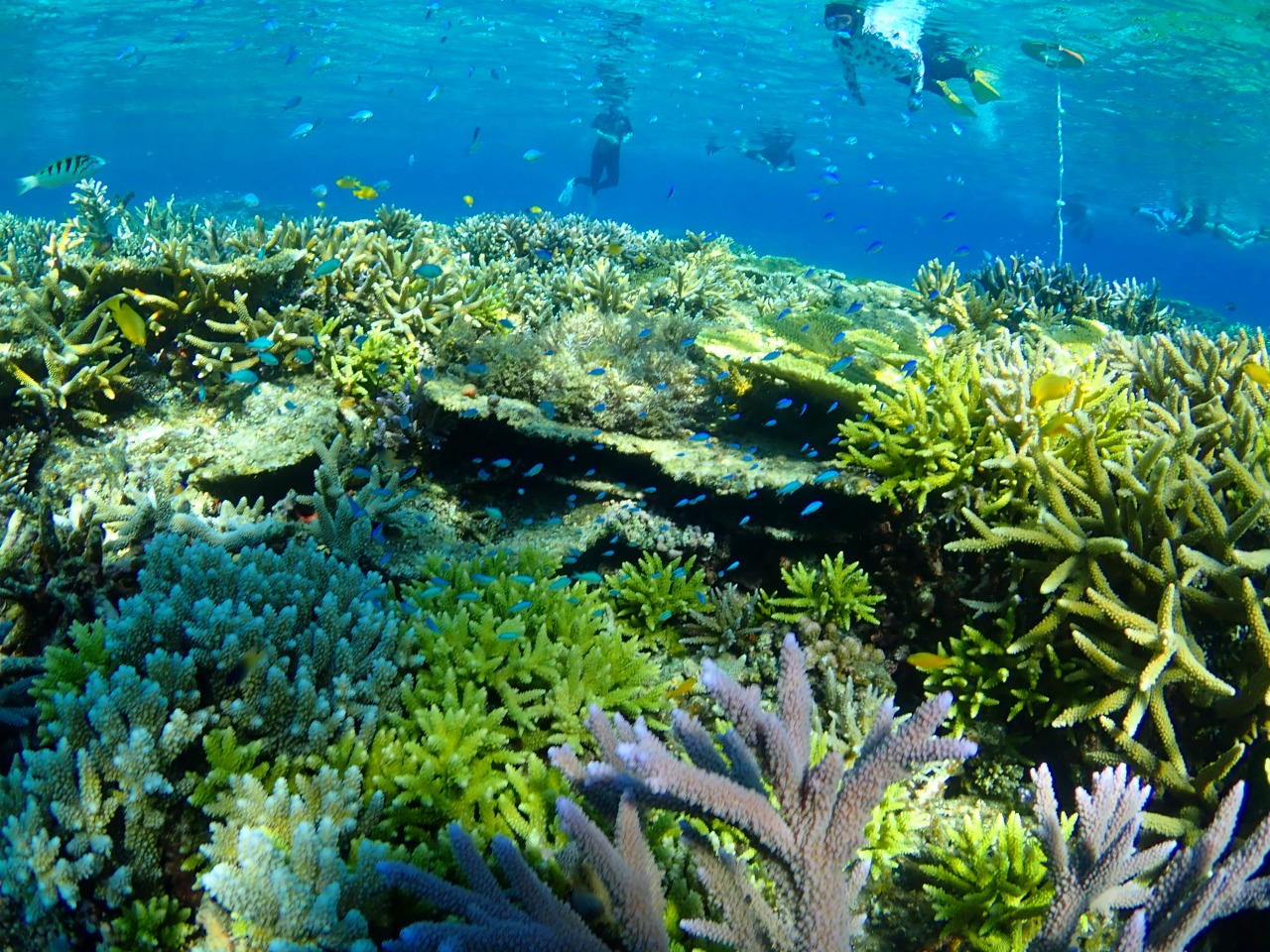 カラフルサンゴ地帯での体験ダイビング