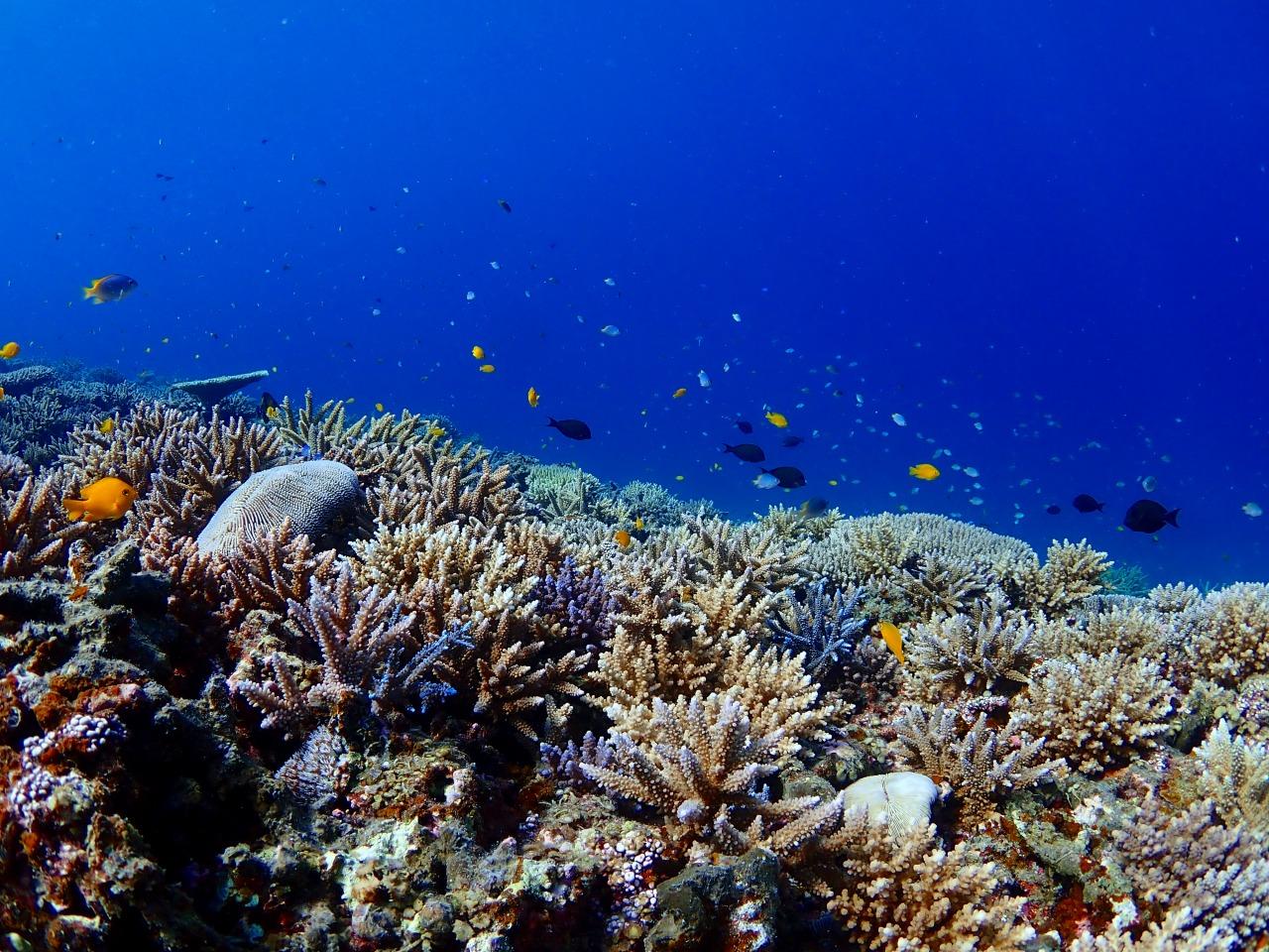 クマノミなどのカラフルサンゴの海