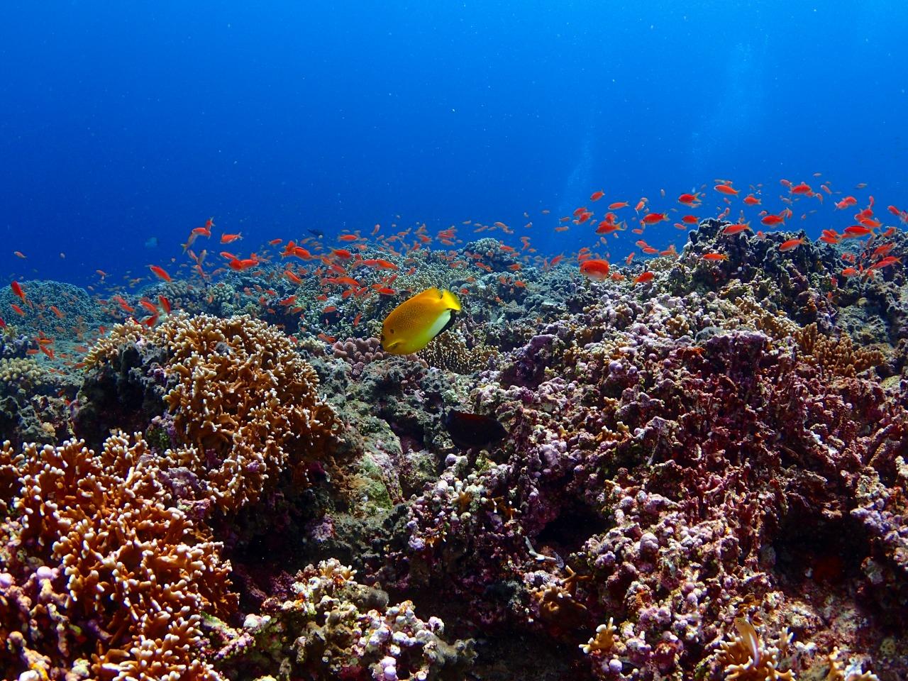 カラフル熱帯魚を見られる宮古島の海
