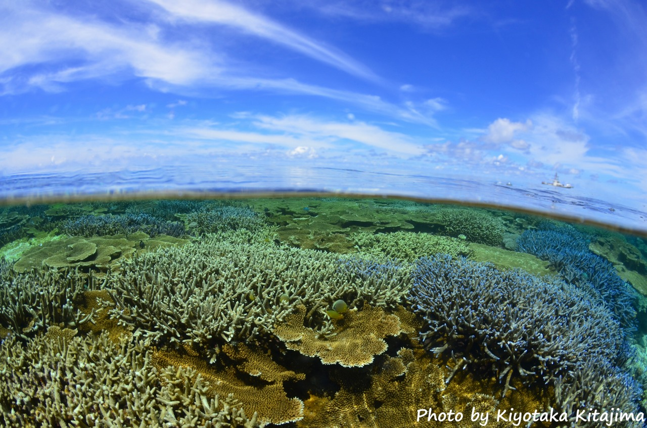 海底が見えるほどの八重干瀬の海