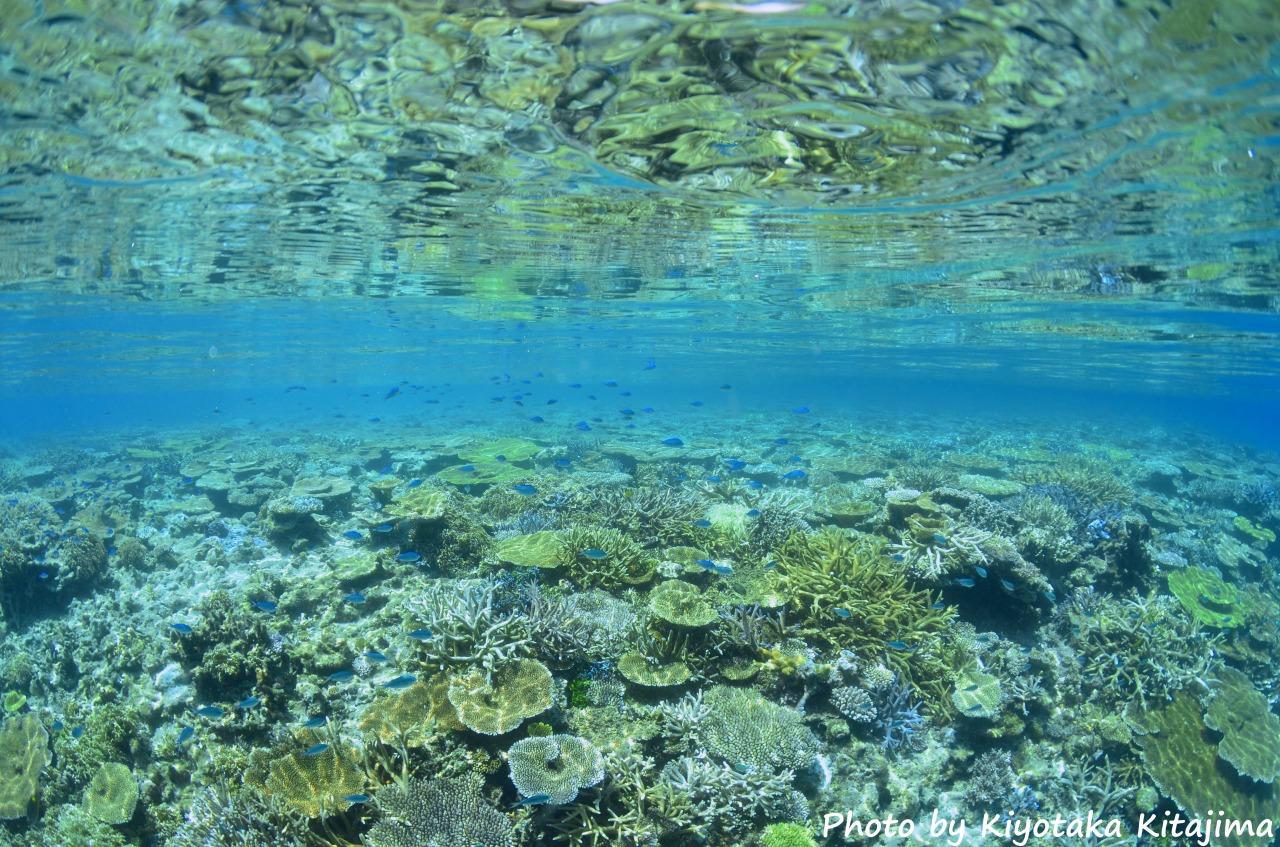 八重干瀬エリアで体験ダイビングツアー