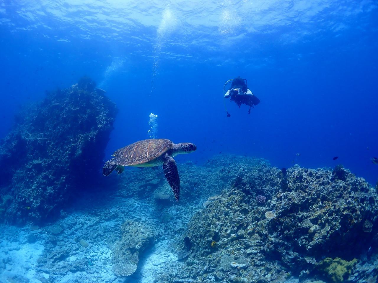 ウミガメも見られる宮古島の海