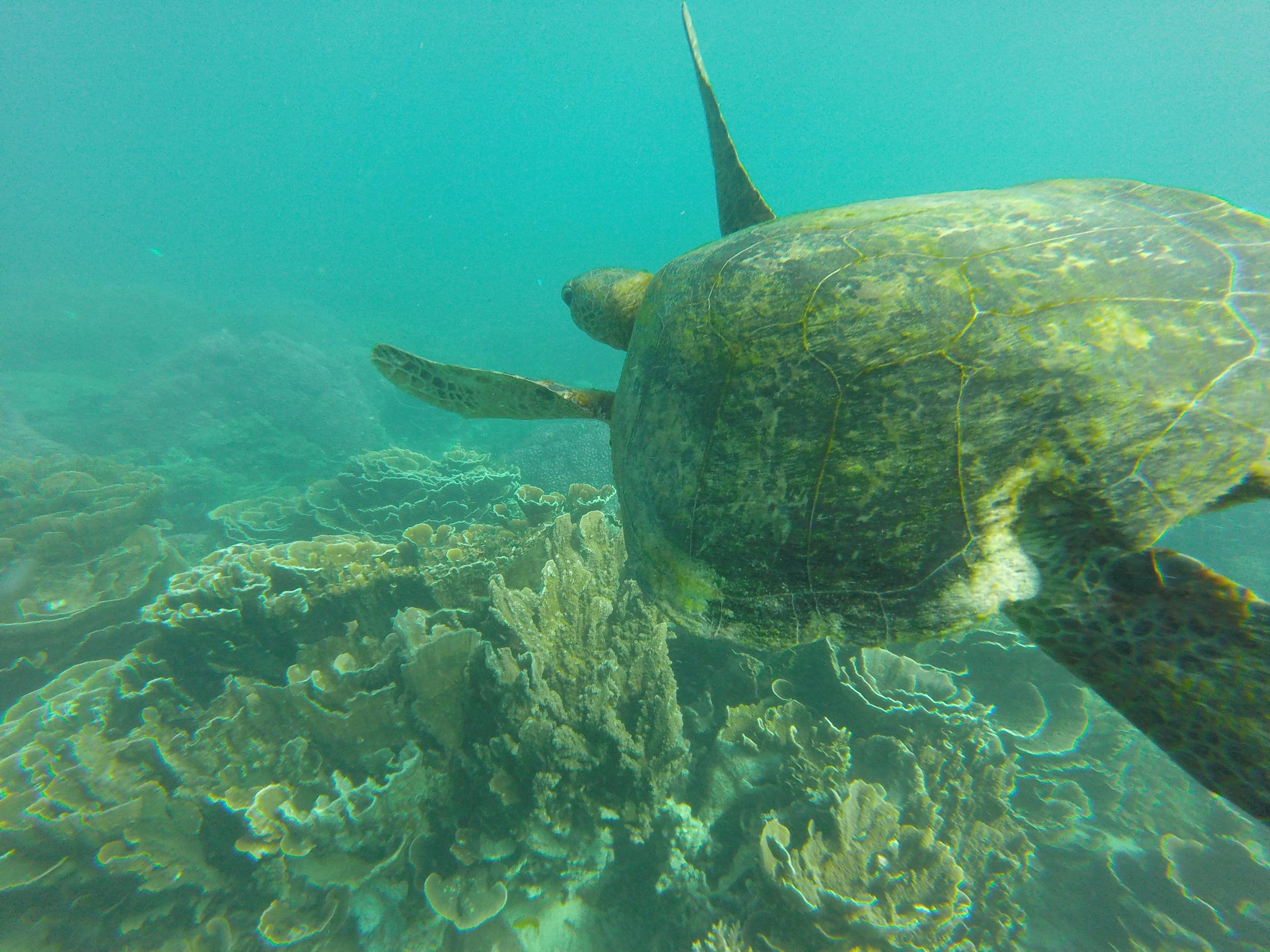 宮古島のウミガメのイメージ