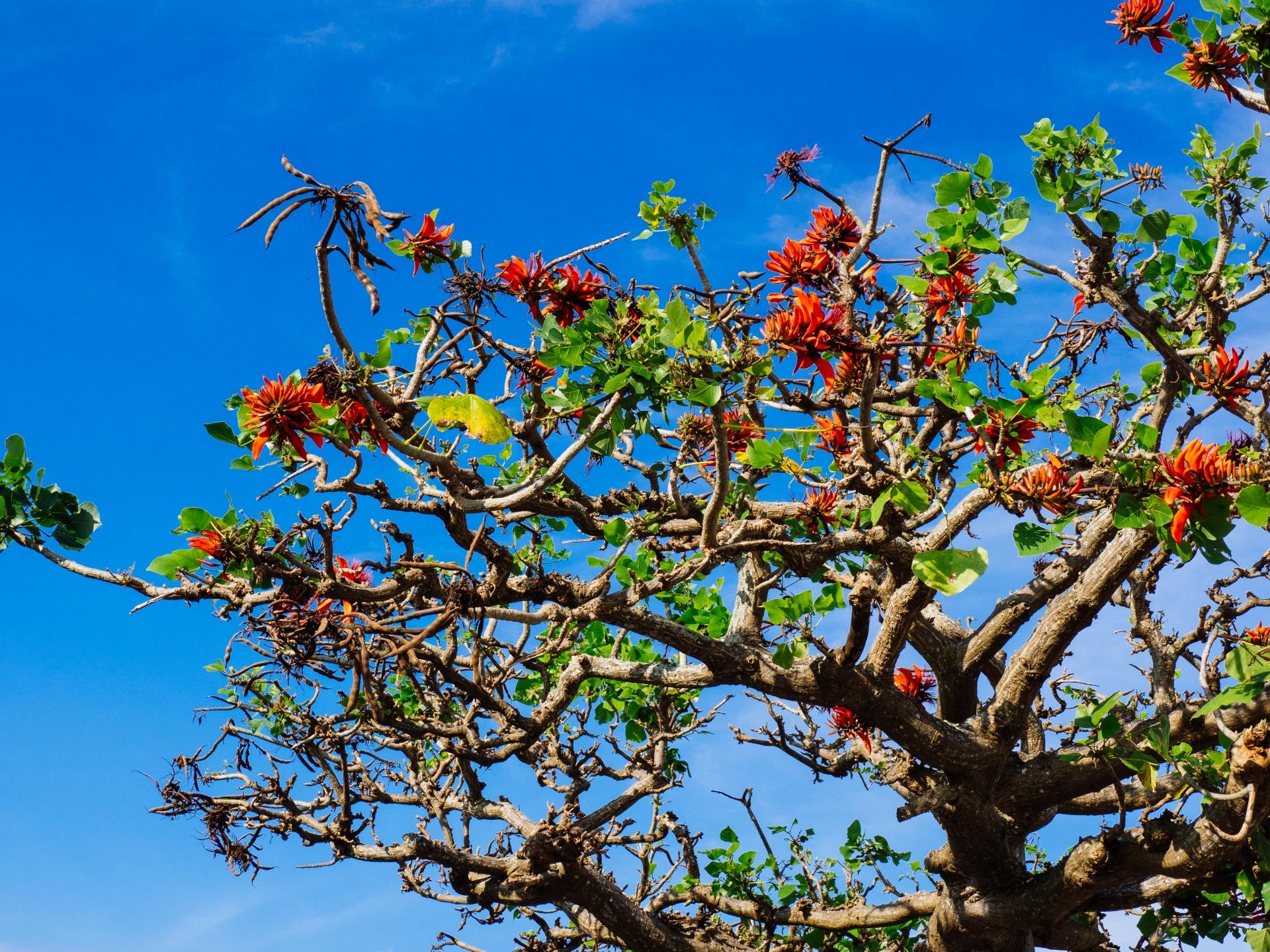 春の宮古島のイメージ