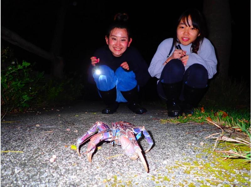 宮古島のナイトツアー