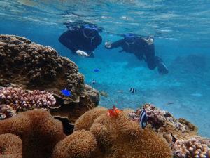 透明な海で熱帯魚とシュノーケリング