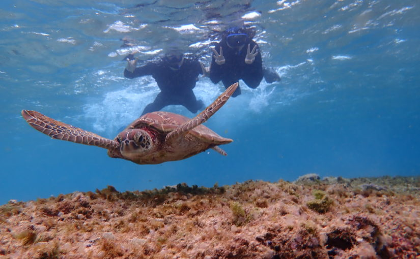 ウミガメの後ろについて泳ぐカップル