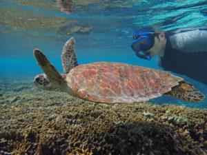 宮古島のシュノーケリング体験中にウミガメに遭遇