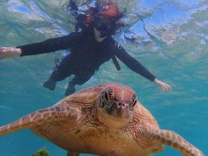 宮古島のシュノーケリング中にウミガメに遭遇