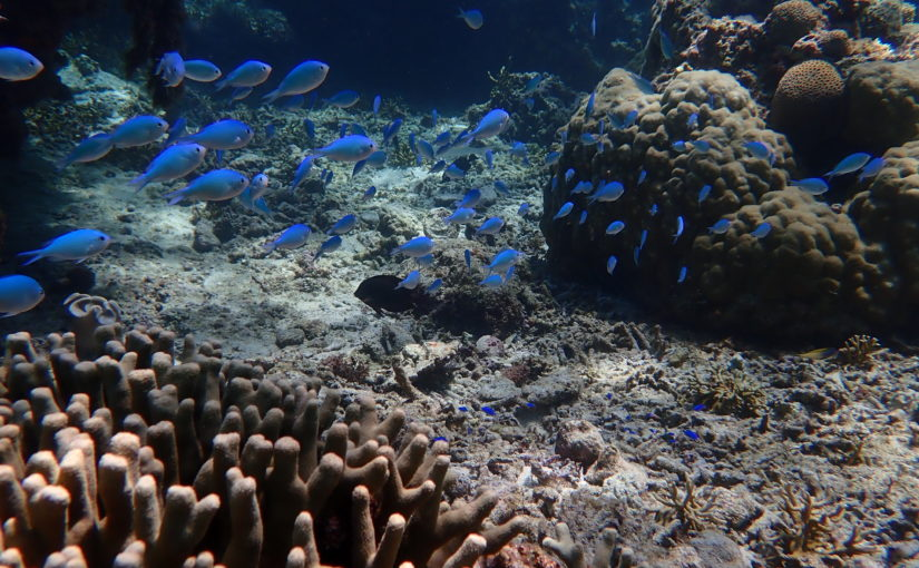 宮古島の魚