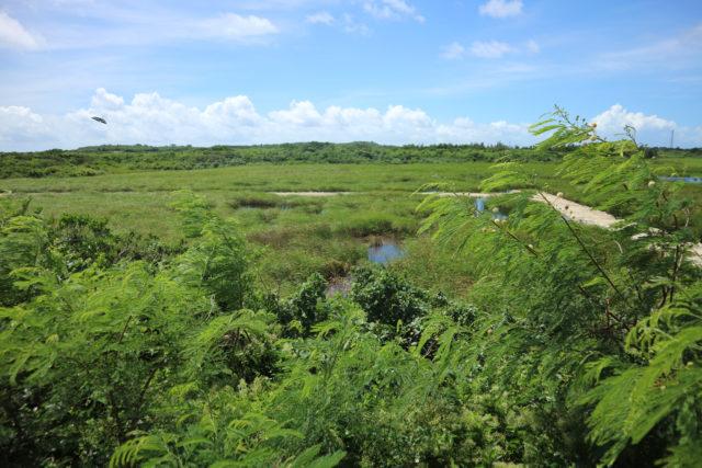 宮古島 池間湿地